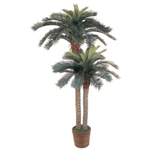 double sago palm tree in basket planter for sale