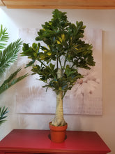 Load image into Gallery viewer, schefflera tree for sale