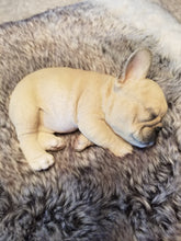 Load image into Gallery viewer, sleeping french bulldog puppy dog ornament