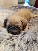 Load image into Gallery viewer, sleeping pug puppy dog ornament