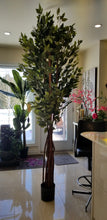Load image into Gallery viewer, super deluxe ficus silk tree for sale