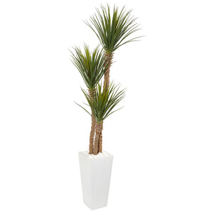 Yucca SIlk Tree in White Tower Planter