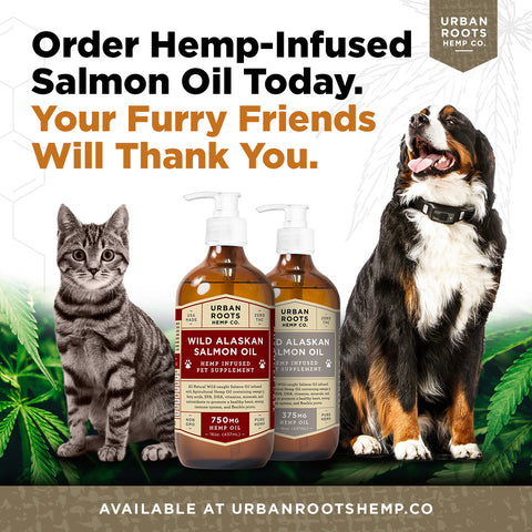 CBD for pet nutrition