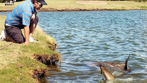 Sharks on a golf course?