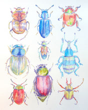 Load image into Gallery viewer, Beetles: Print of my Original Watercolor Painting