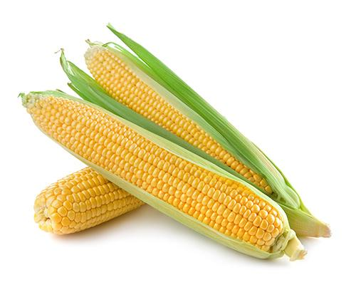 Corn On Cob - per lb