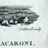 Now Sir You'r a Compleat Macaroni, caricature anglaise d'après Brandoin (1772)