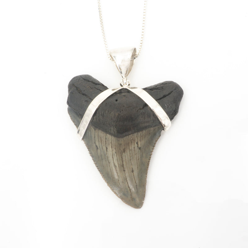 S/S Fossil Shark Tooth Pendant