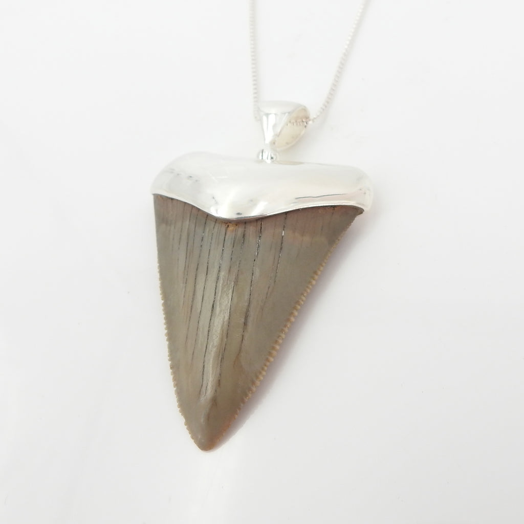 Sterling Silver Fossilized Shark Tooth Pendant
