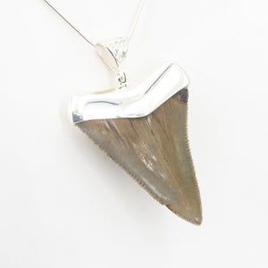 S/S Shark Tooth Pendant