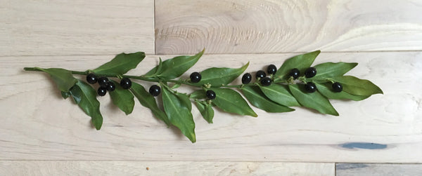 a branch of sarcococca berries on a wood floor