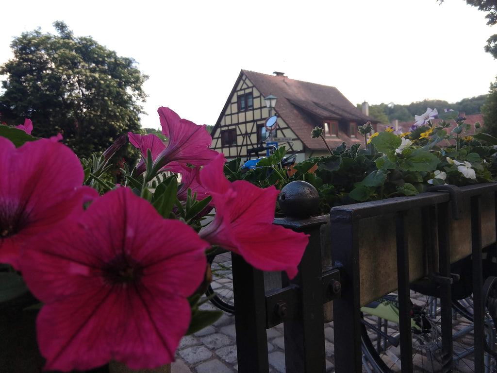 Photo of petunias in the foreground and Bavarian architecture in the background