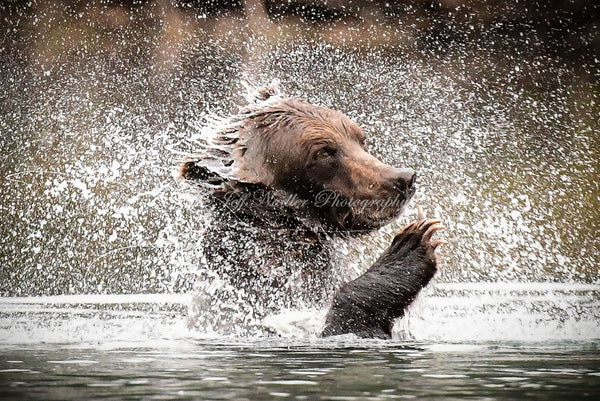 """Bear Spray"""