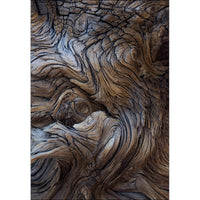"""Crater Creatures"" Photography on Metal by Nancy Roux"