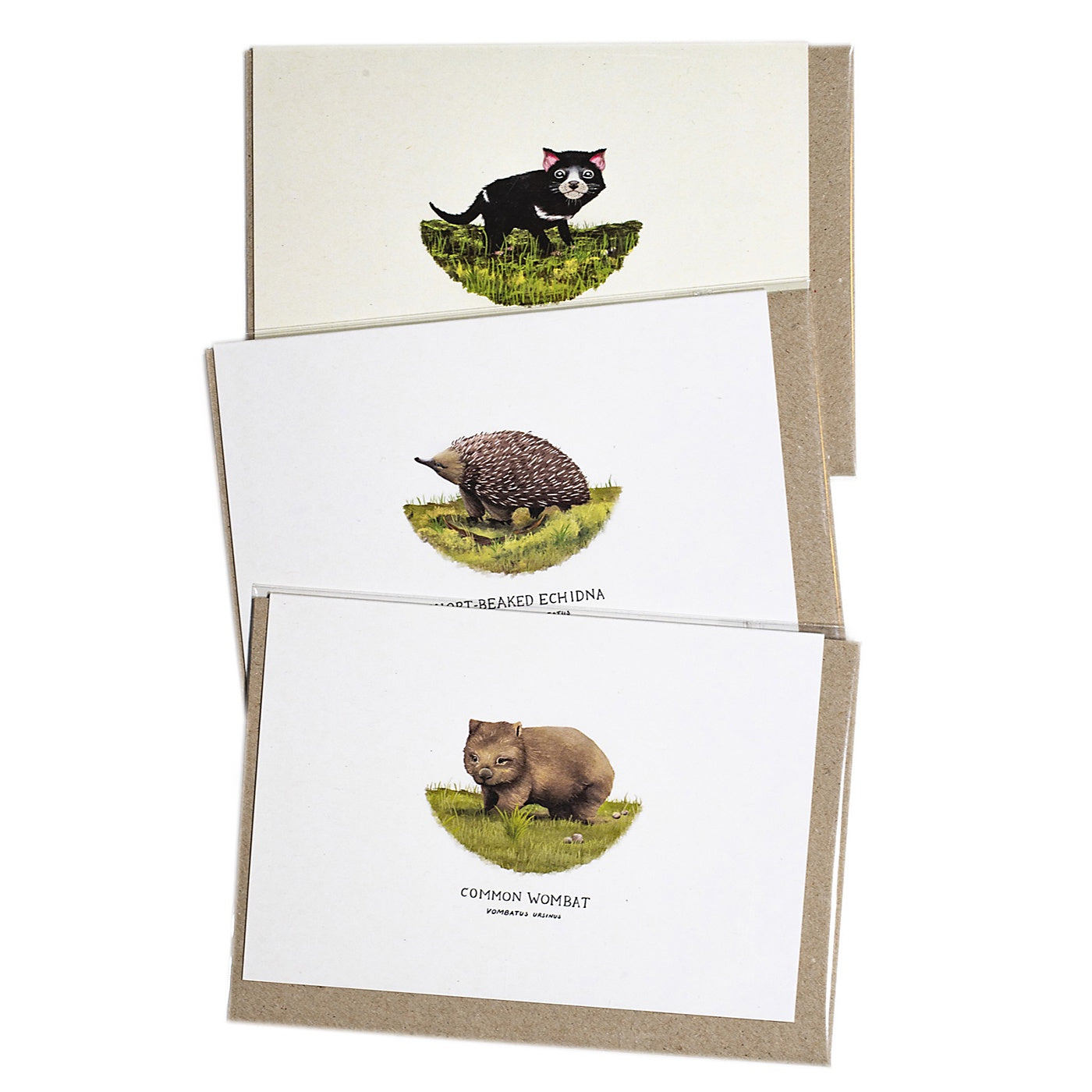 Sam Lyne - Pack of 3 Cards