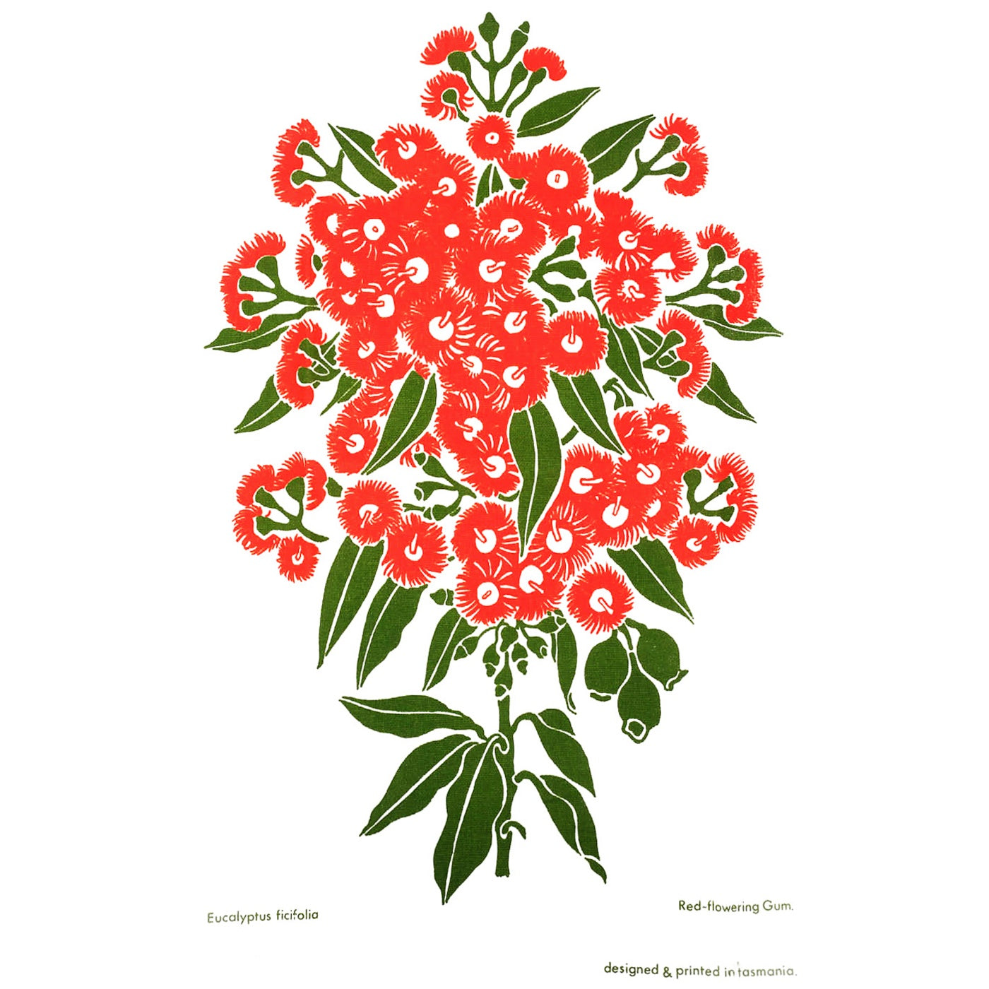 The T-Towel Gallery - Tea Towel - Red Flowering Gum