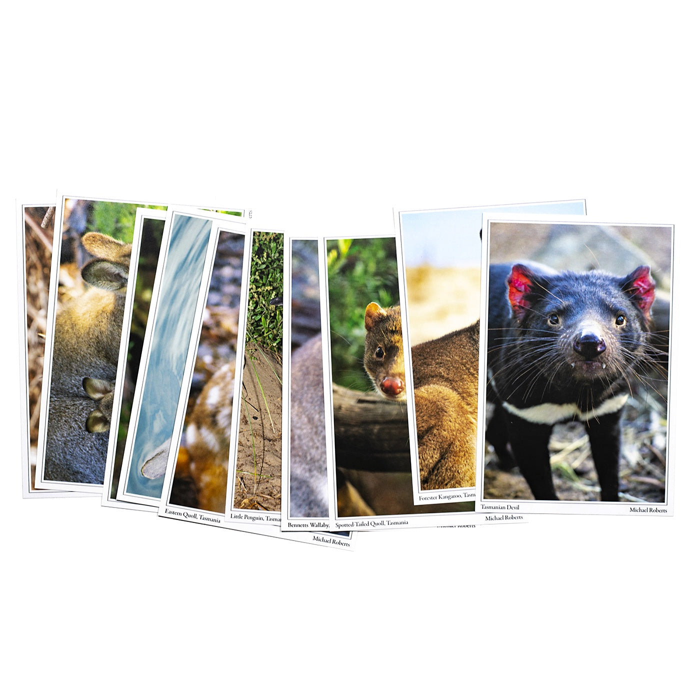 Mountain Peak Photography - Pack of 10 Postcards - Tasmanian Wildlife