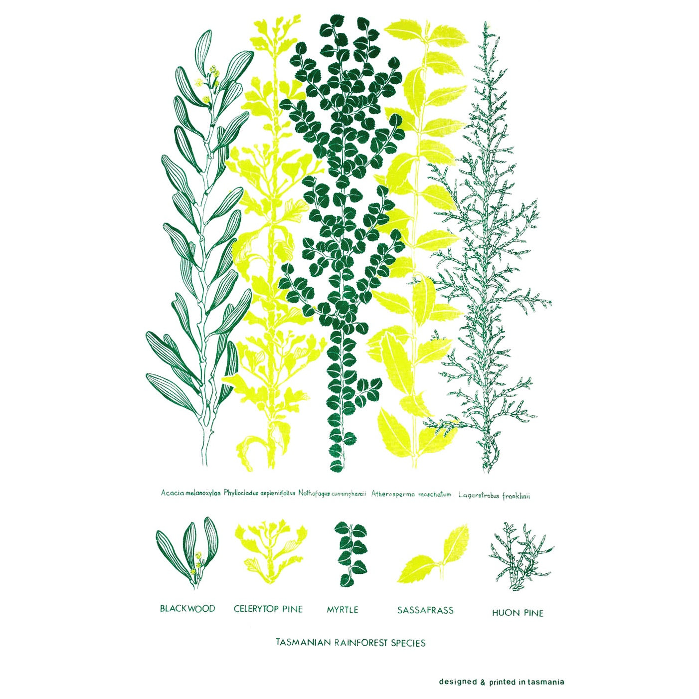 The T-Towel Gallery - Tea Towel - Tasmanian Rainforest Species