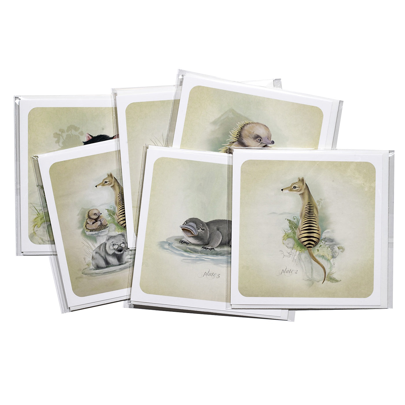 Terry Whidborne - Pack of 6 Cards
