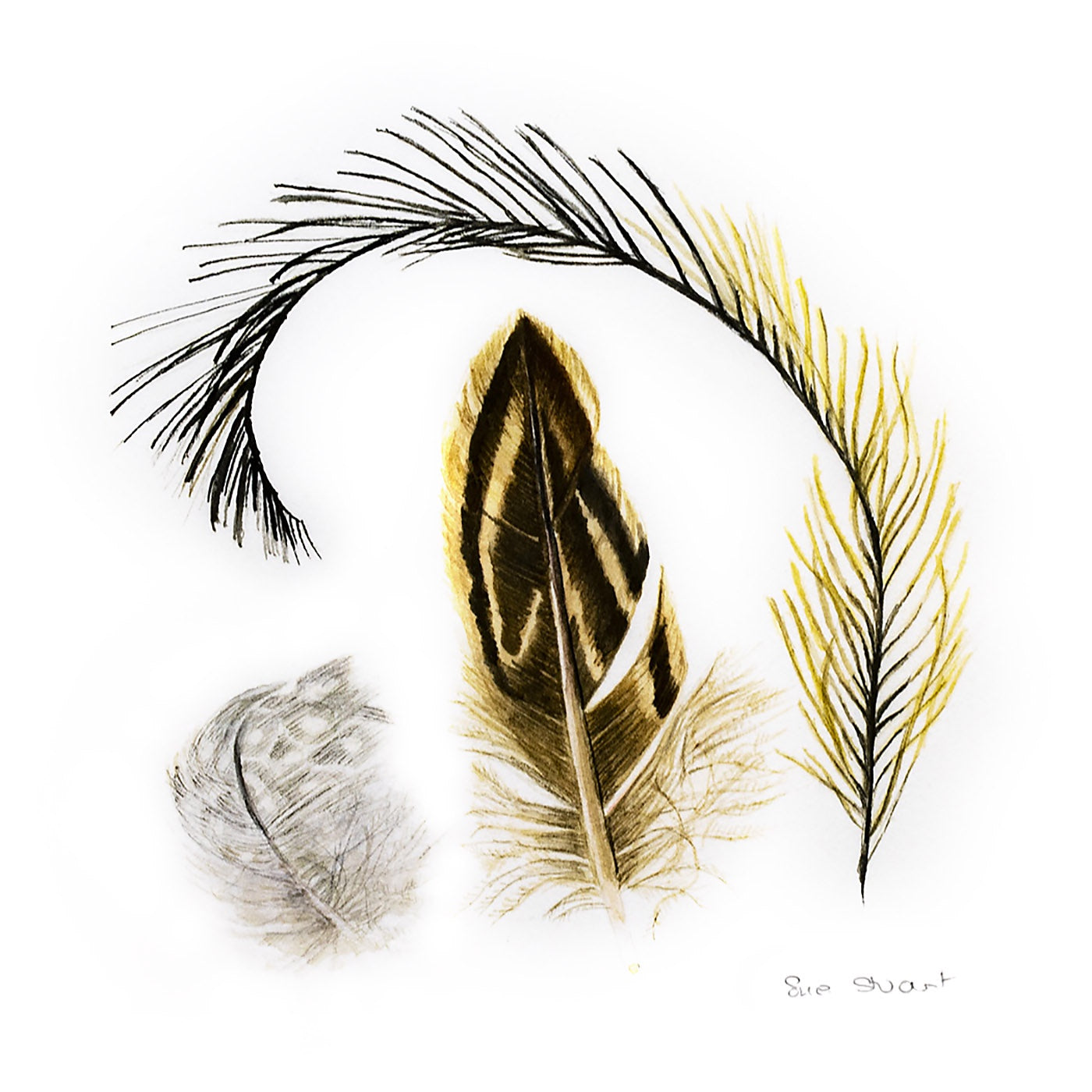 Sue Stuart - Art Print - Feathers II