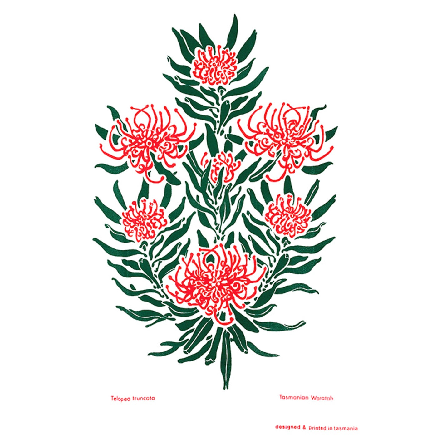 The T-Towel Gallery - Tea Towel - Waratah