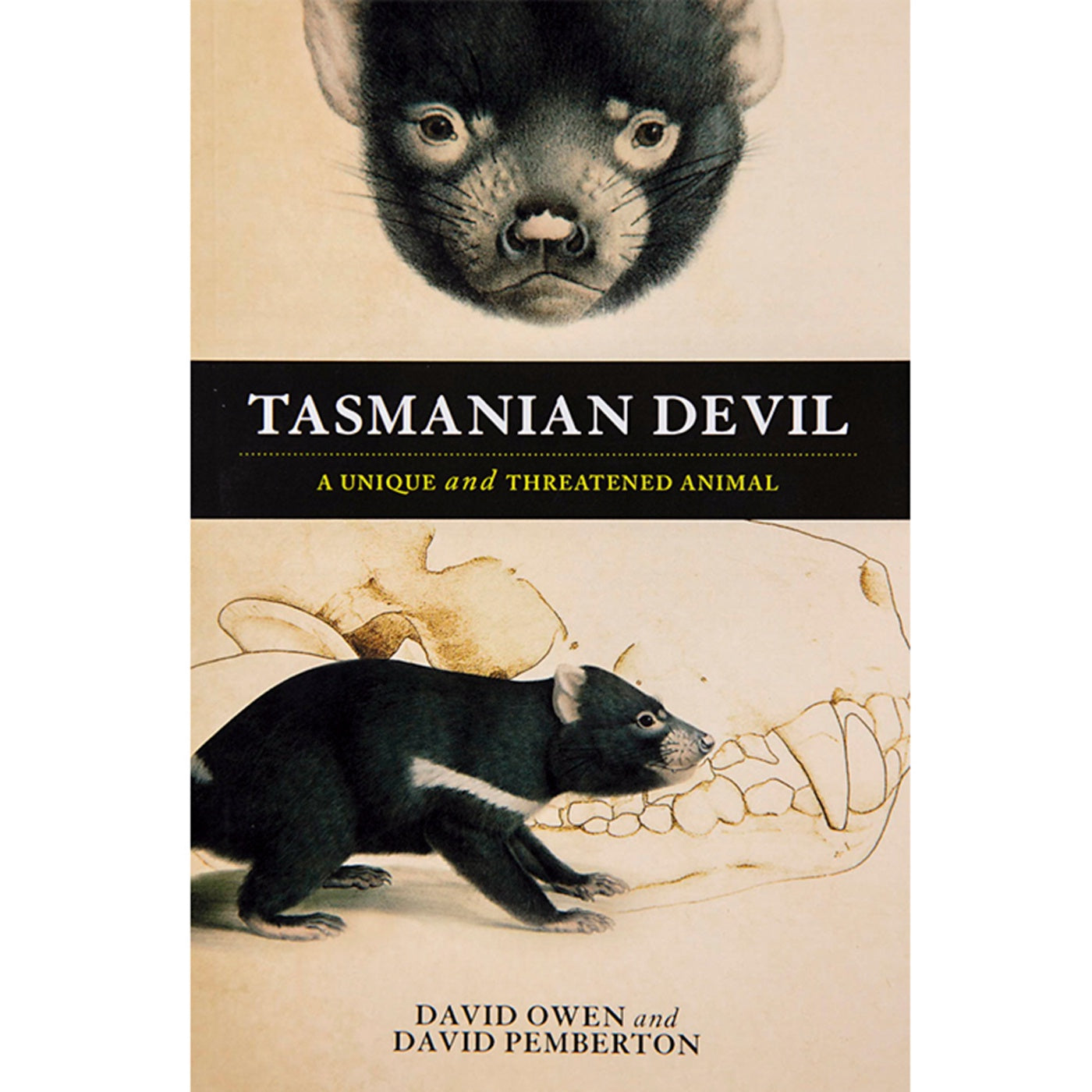 Tasmanian Devil: A Unique And Threatened Animal