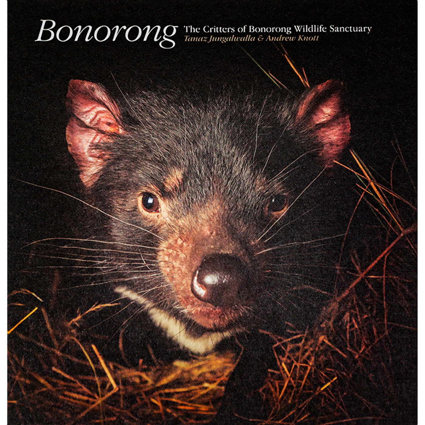 Bonorong - The Critters of Bonorong Wildlife Sanctuary