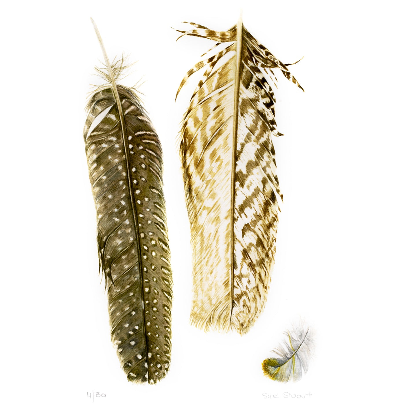 Sue Stuart - Art Print - Feathers I