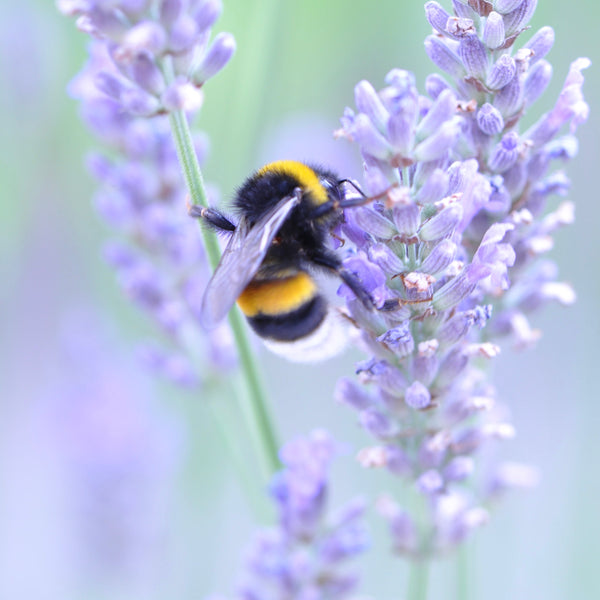 Save Our Bees – Bee Friendly