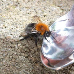 Bee and sugar water from beefayre.com
