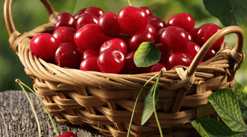 Why Cherries Could be the Secret to Relieving Gout
