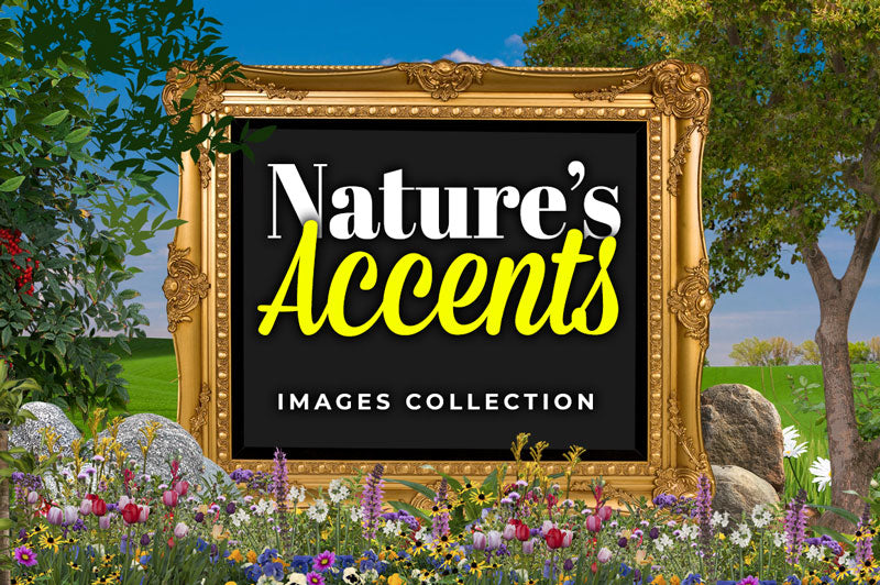 Nature's Accents Images Collection