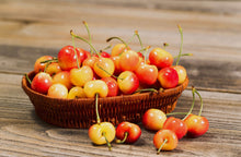 Rainier Cherry Tree - Grow the worlds premium cherry right at home! (2 years old and 3-4 feet tall.)