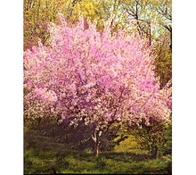 Halls Hardy Almond Tree - Cold tolerant almond tree! (2 years old and 3-4 feet tall)