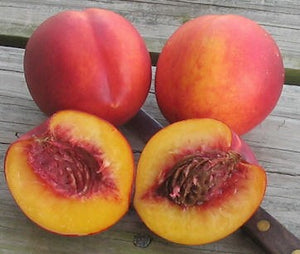 Red Gold Nectarine Tree - Deep red outside, sweet tangy flavor inside! (2 years old and 3-4 feet tall.)