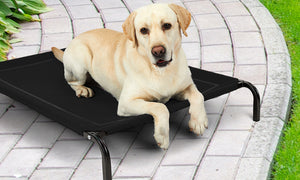 Non-toxic Superior Pet Beds