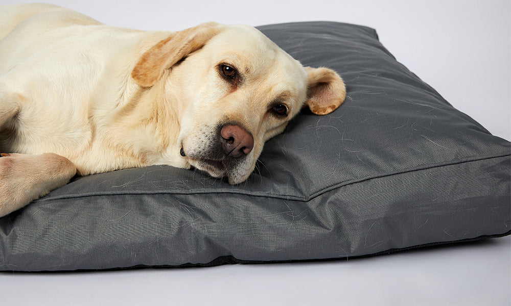 Waterproof Orthopedic Memory Foam Pet Bed