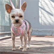 - EasyGo Pineapple Dog Harness & Leash Set in Pink DOGO NEW ARRIVAL