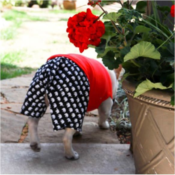 - Elephant Boxer Shorts For Dogs New Arrival
