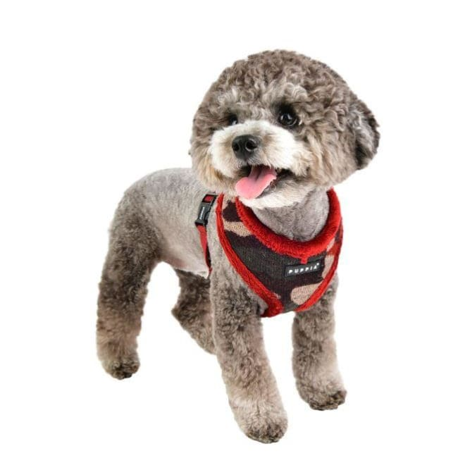 Colonel Dog Harness A dog harnesses, harnesses for small dogs, NEW ARRIVAL