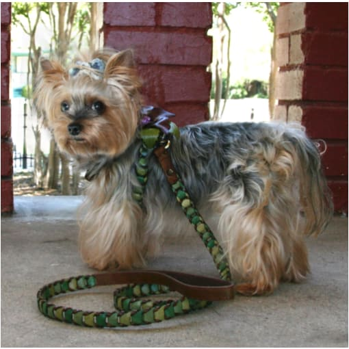 - Shades Of Green Leather Dog Leash Dog In The Closet New Arrival