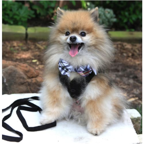- White Shirt Dog Collar With Plaid Bow Tie Dog In The Closet New Arrival
