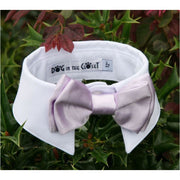 - White Shirt Dog Collar With Lilac Bow Tie dog in the closet NEW ARRIVAL