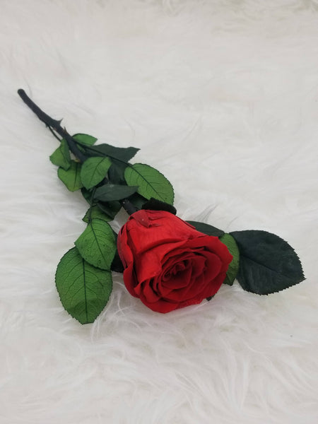 Forever Red Rose stem preserved
