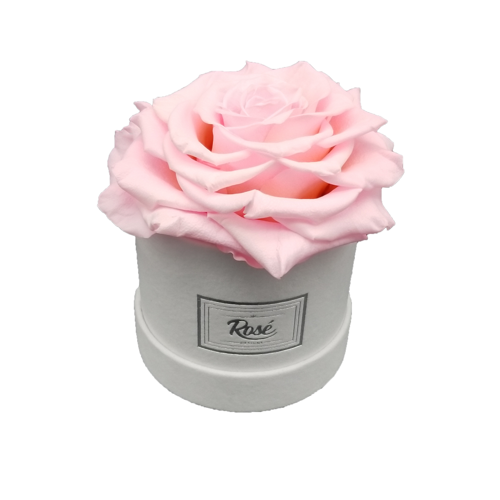 Extra Large Pink Ecuadorian Rose in White Velvet Box