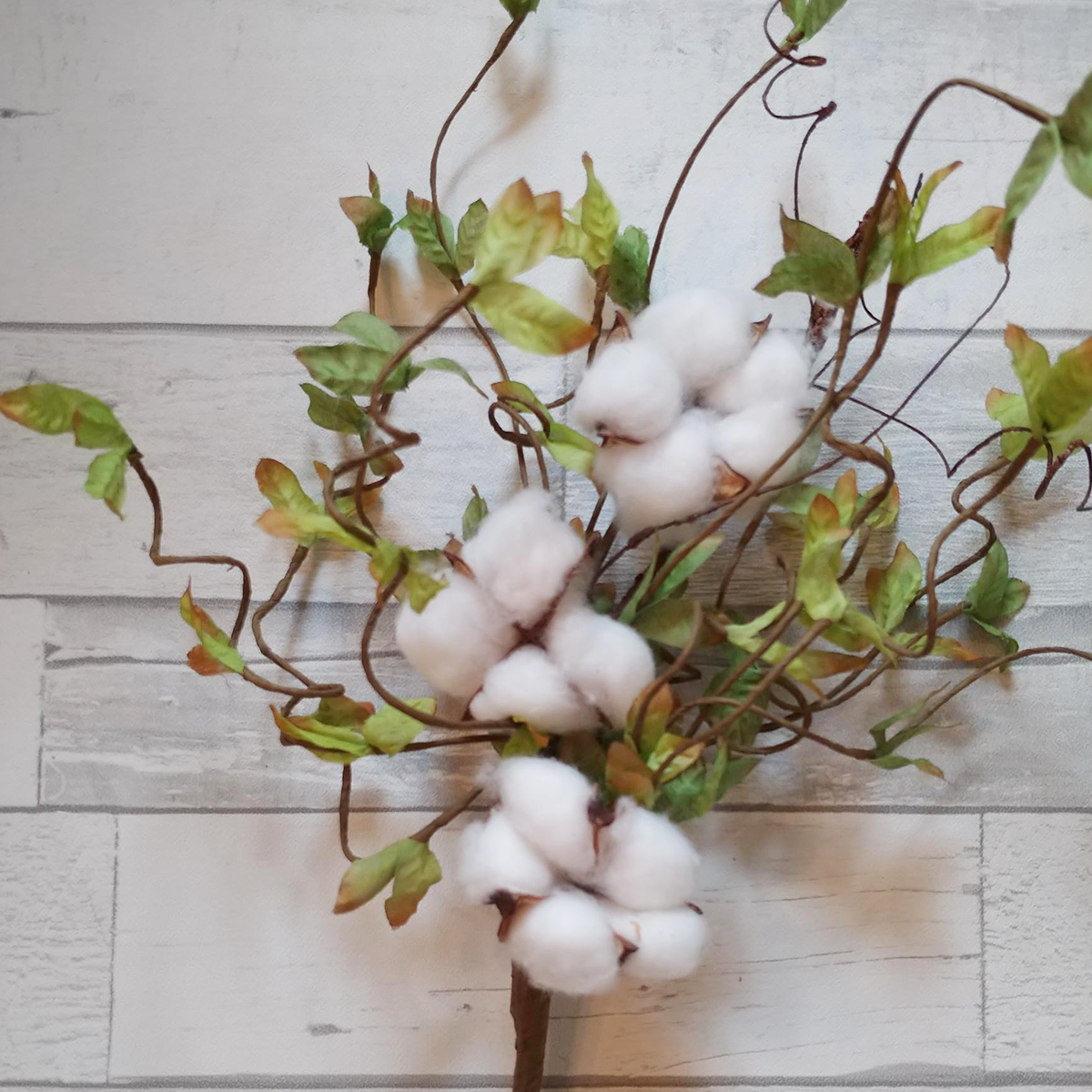 Cotton Stem with Leaves