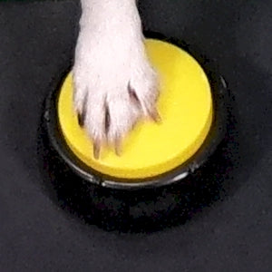 dog training buttons
