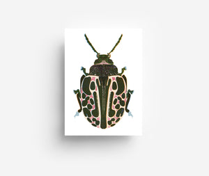 Spotted Bug Postcard DIN A6