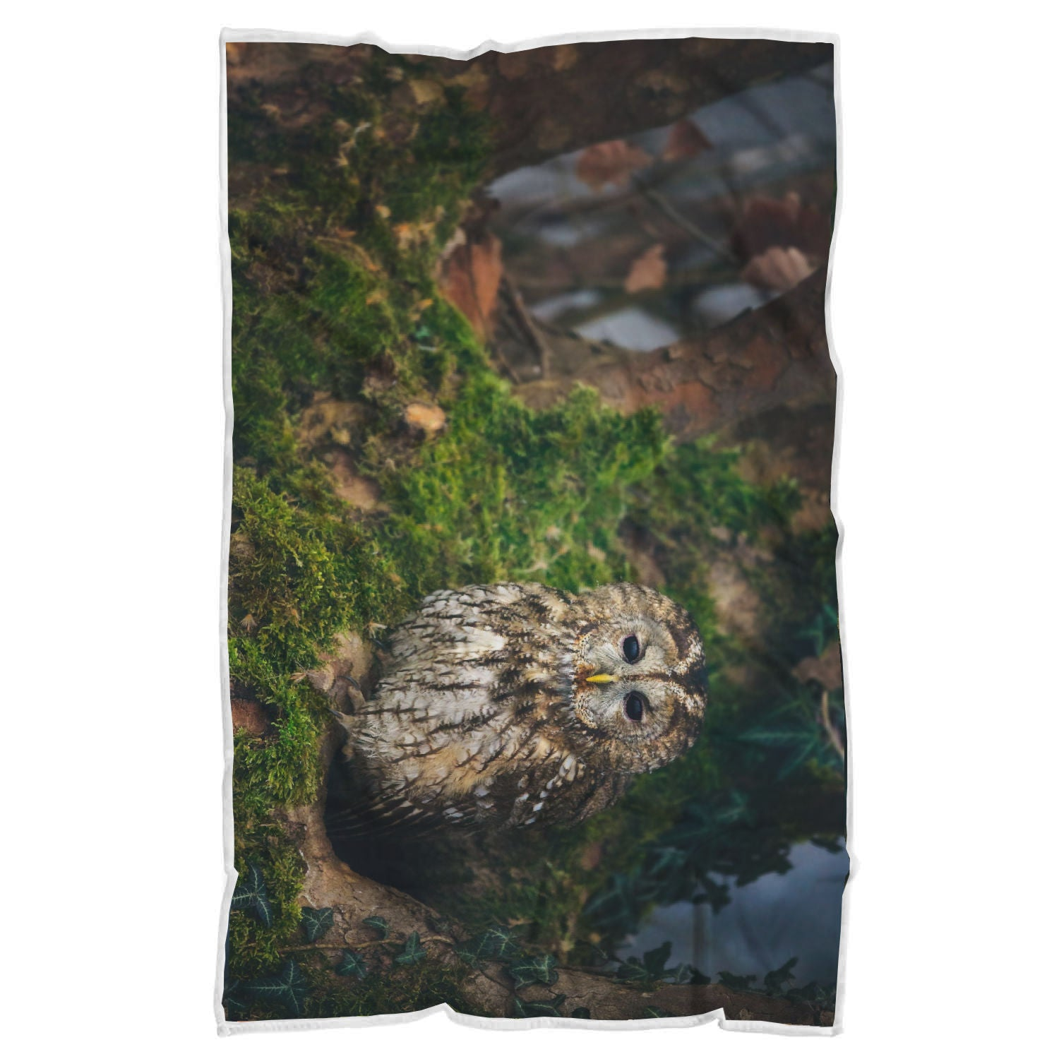Owl Blanket-Peaceful Solitude