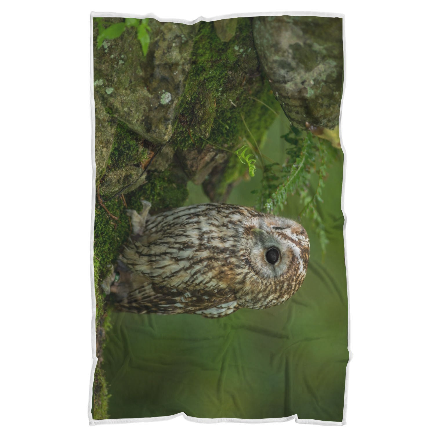 Owl Blanket-Adorable Owl